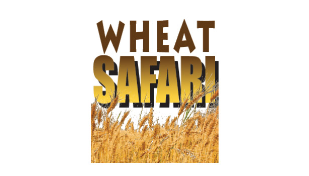 On a Wheat Safari