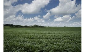 New Non-GMO, High Oleic Soybean Variety to be Grown in Illinois