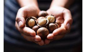 World Macadamia Organisation launches in Singapore