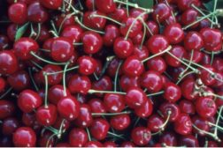 A pile of cherries