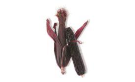 Suntava Purple Corn