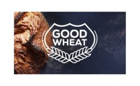 Arcadia Biosciences reduced gluten wheat