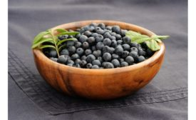 Fruit d'Or Wild Blueberry supply