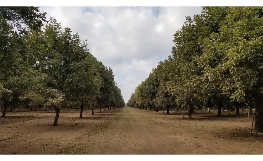 Three Days Among The Texas Pecan Trees 2019 10 16