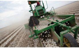 Olam onion harvester