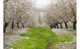 Almond Board Invests $6.8M in Research to Fuel Farming Innovation