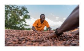 Barry Callebaut cocoa sustainability