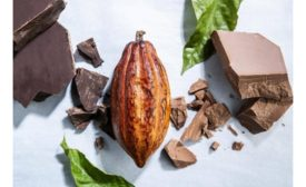 Sharing Barry Callebauts knowledge with industry to improve carbon reduction goals in the cocoa supply chain