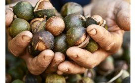 How Australian grown macadamias are meeting the sustainability demands of the conscious consumer
