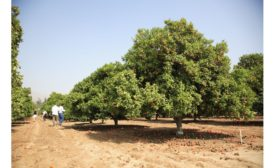 Givaudan demonstrates its commitment to citrus biodiversity with new donation to University of California, Riverside