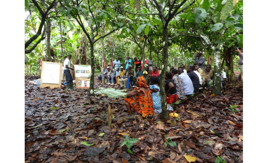 Barry Callebaut establishes 100 percent traceability for cocoa supply chain, Ivory Coast and Ghana