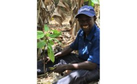 Guittard Chocolate Company adds Cultivate Better Cocoa Partner Program to sustainability initiative