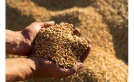 Univar Solutions appoints distributor of Evergrains plant-based ingredients, in multiple regions