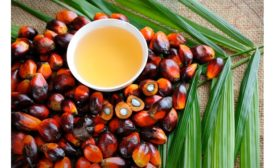 Malaysian Palm Oil industry develops blockchain tech to further improve accountability