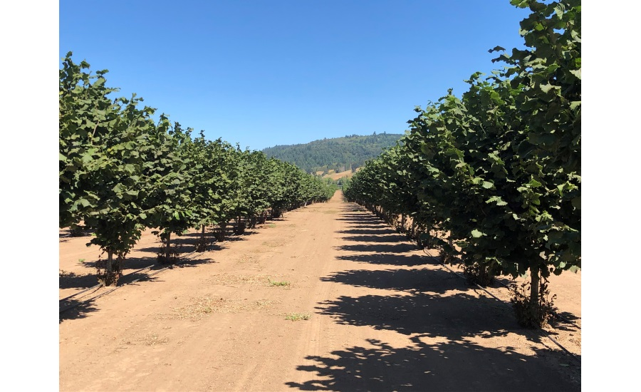 Exclusive interview: Q&A with Hazelnut Growers of Oregon, on SQF Certification and COVID-19 challenges