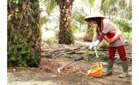 Empowering women and sustainability in the palm oil industry