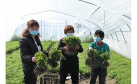 Tate & Lyle, Earthwatch Europe, and Nanjing Agricultural University launch new program to support sustainability of stevia